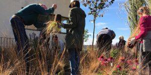 Weeding & Planting Workshop