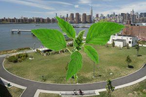 Pigweed plant over Transmitter Park